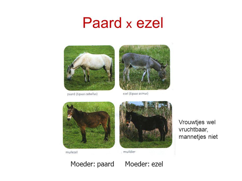Paard x ezel Moeder: paard Moeder: ezel