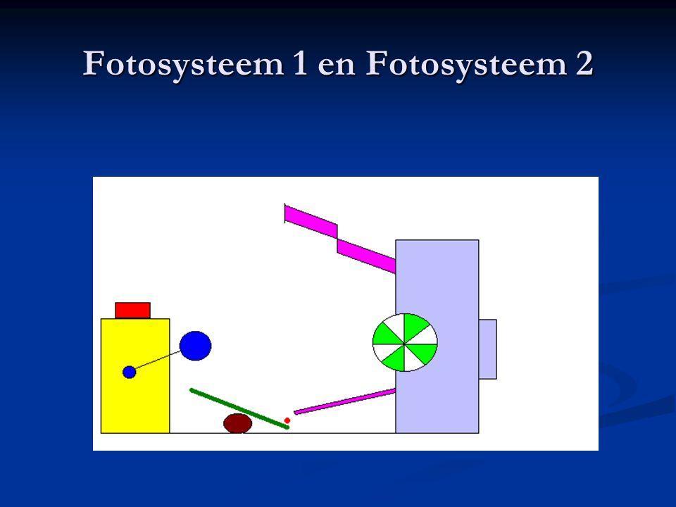 Fotosysteem 1 en Fotosysteem 2
