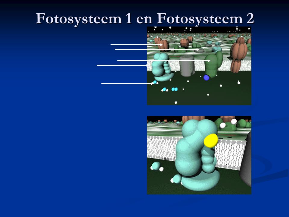 Fotosysteem 1 en Fotosysteem 2
