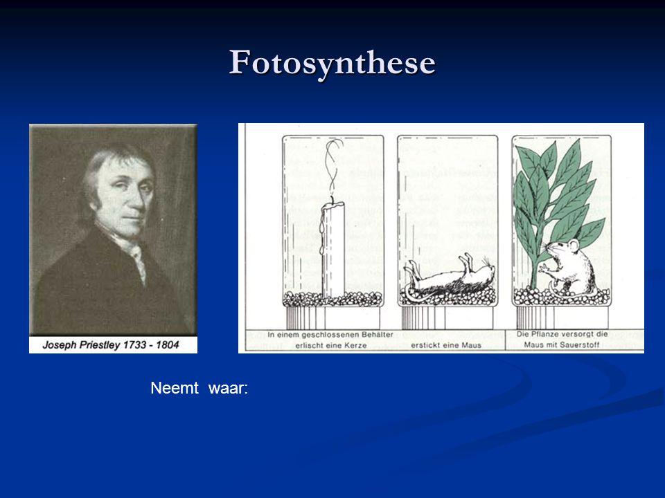 Fotosynthese Neemt waar: