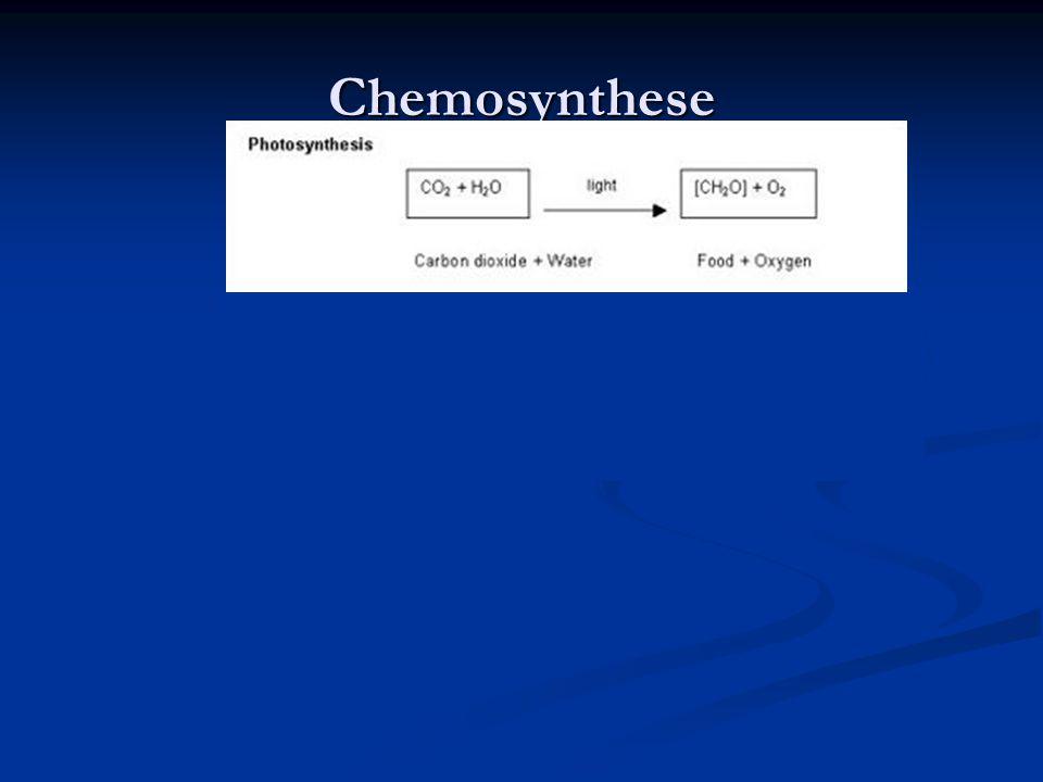 Chemosynthese en stikstofkringloop