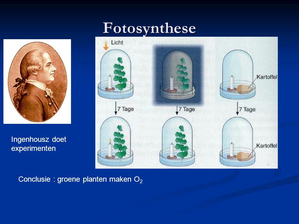 Fotosynthese Ingenhousz doet experimenten