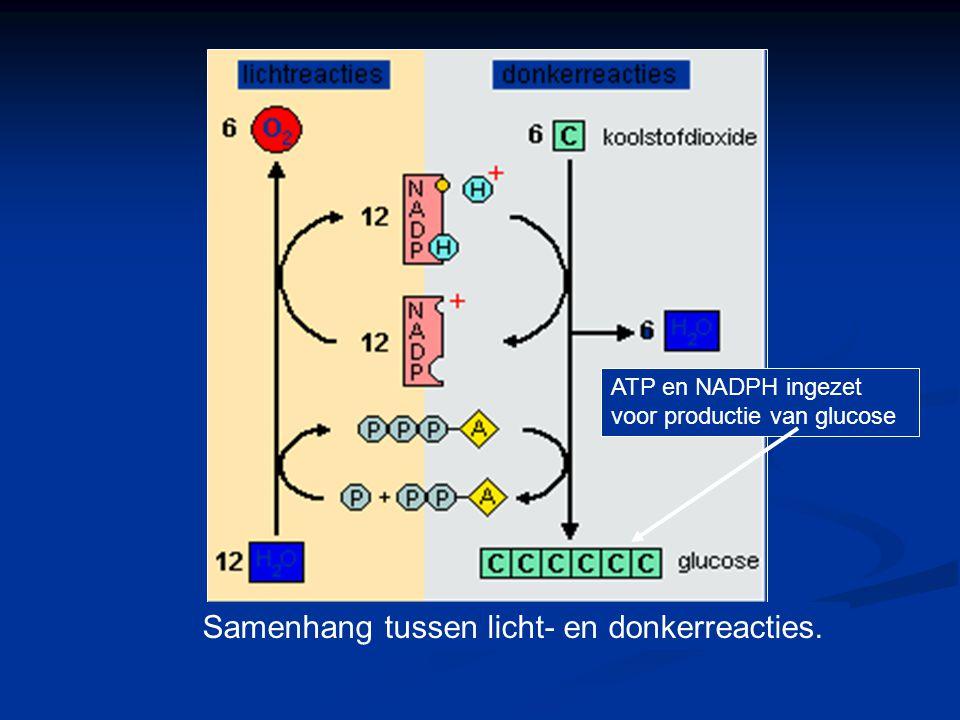 Samenhang tussen licht- en donkerreacties.