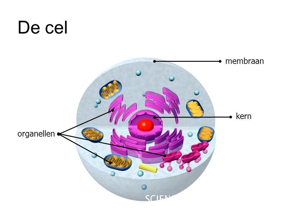 De cel membraan kern organellen