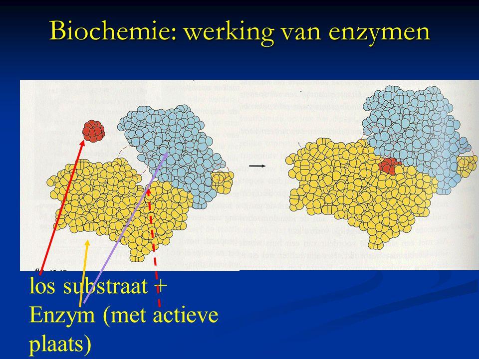 Biochemie: werking van enzymen