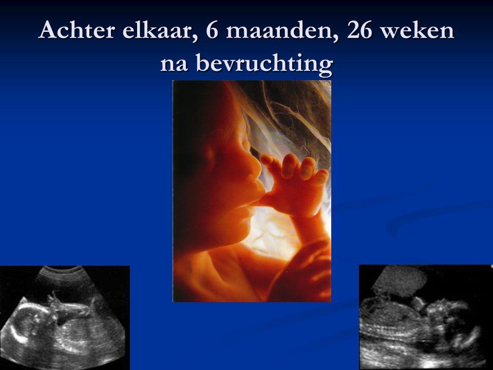 Achter elkaar, 6 maanden, 26 weken na bevruchting