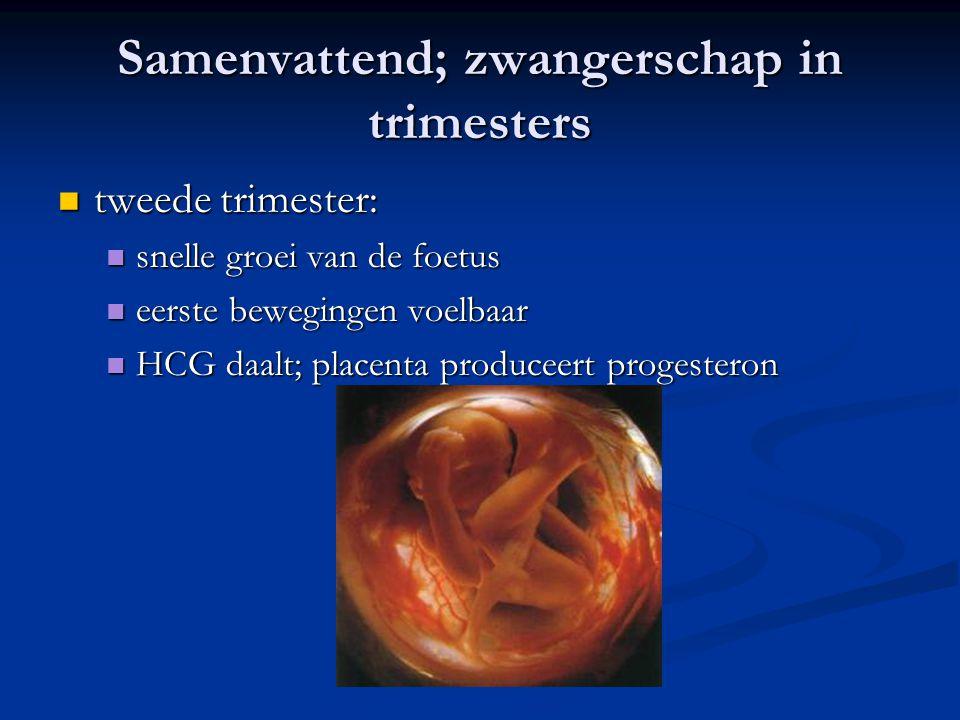 Samenvattend; zwangerschap in trimesters