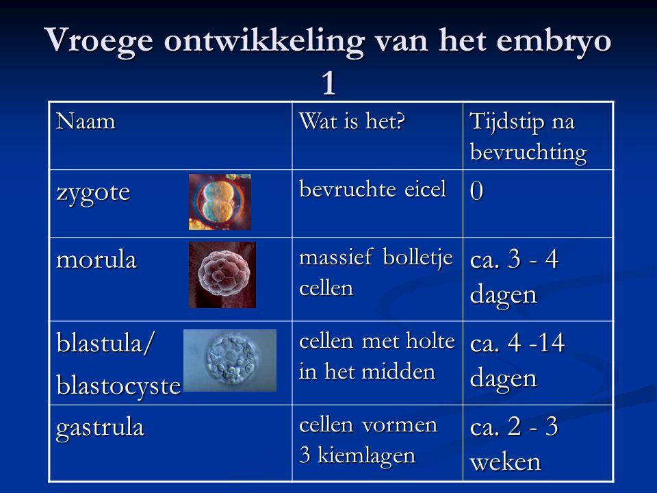 Vroege ontwikkeling van het embryo 1