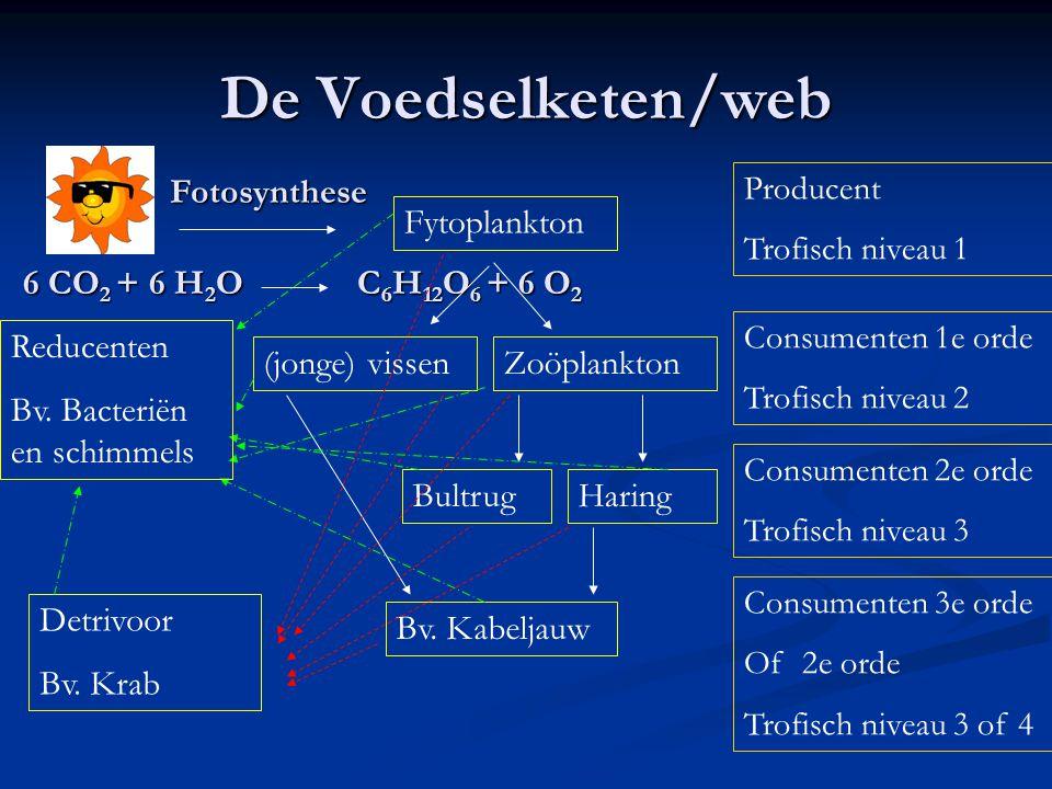 De Voedselketen/web Fotosynthese Fytoplankton