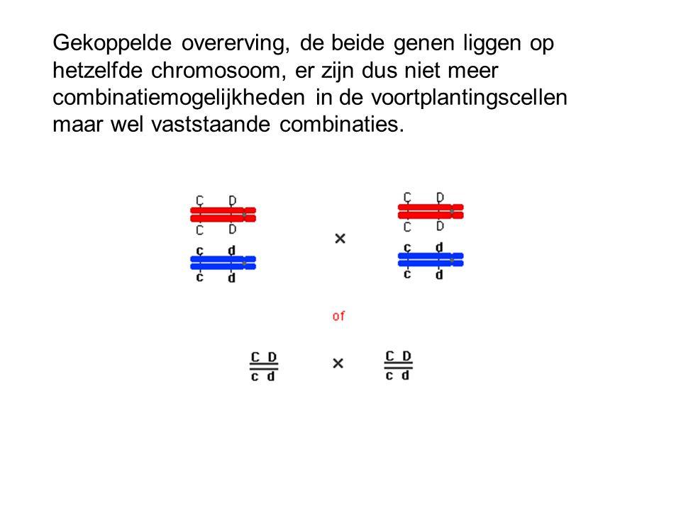 Gekoppelde overerving, de beide genen liggen op hetzelfde chromosoom, er zijn dus niet meer combinatiemogelijkheden in de voortplantingscellen maar wel vaststaande combinaties.