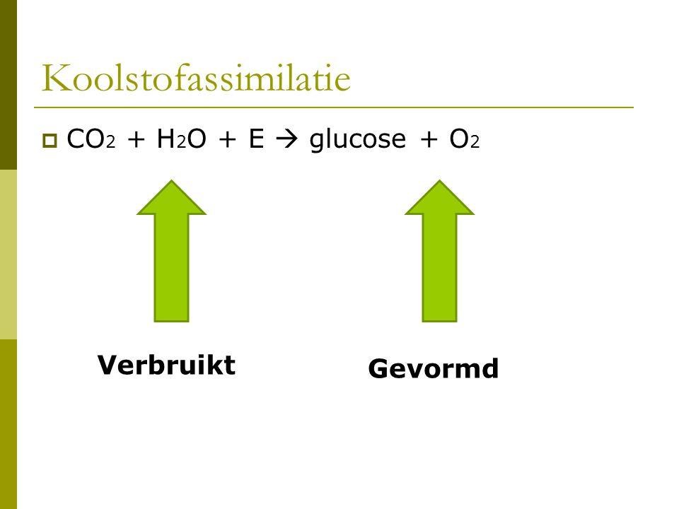 Koolstofassimilatie CO2 + H2O + E  glucose + O2 Verbruikt Gevormd