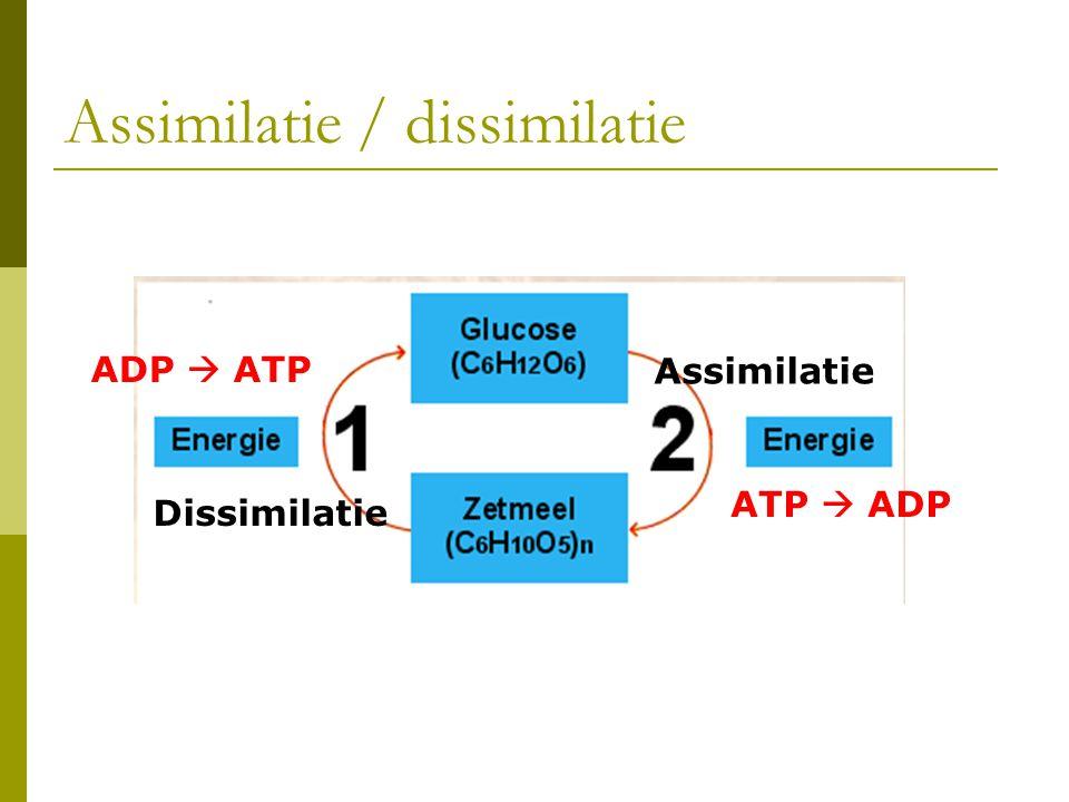 Assimilatie / dissimilatie