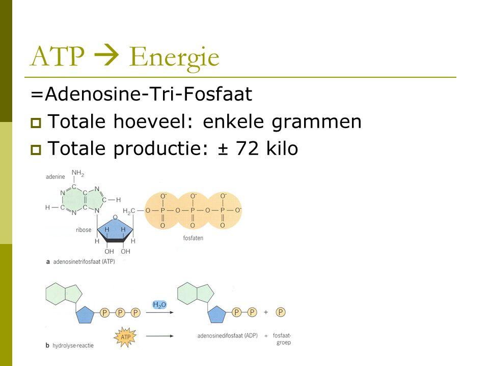 ATP  Energie =Adenosine-Tri-Fosfaat Totale hoeveel: enkele grammen