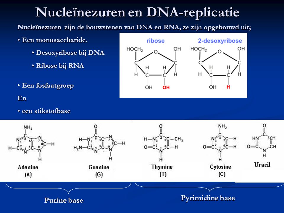 Nucleïnezuren en DNA-replicatie