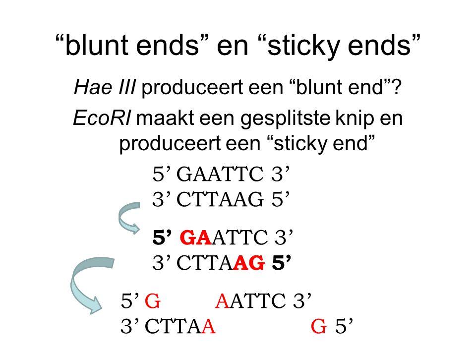blunt ends en sticky ends