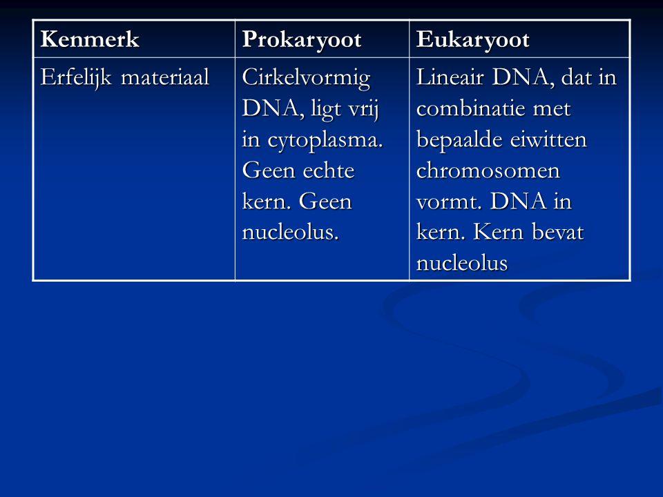Kenmerk Prokaryoot. Eukaryoot. Erfelijk materiaal. Cirkelvormig DNA, ligt vrij in cytoplasma. Geen echte kern. Geen nucleolus.