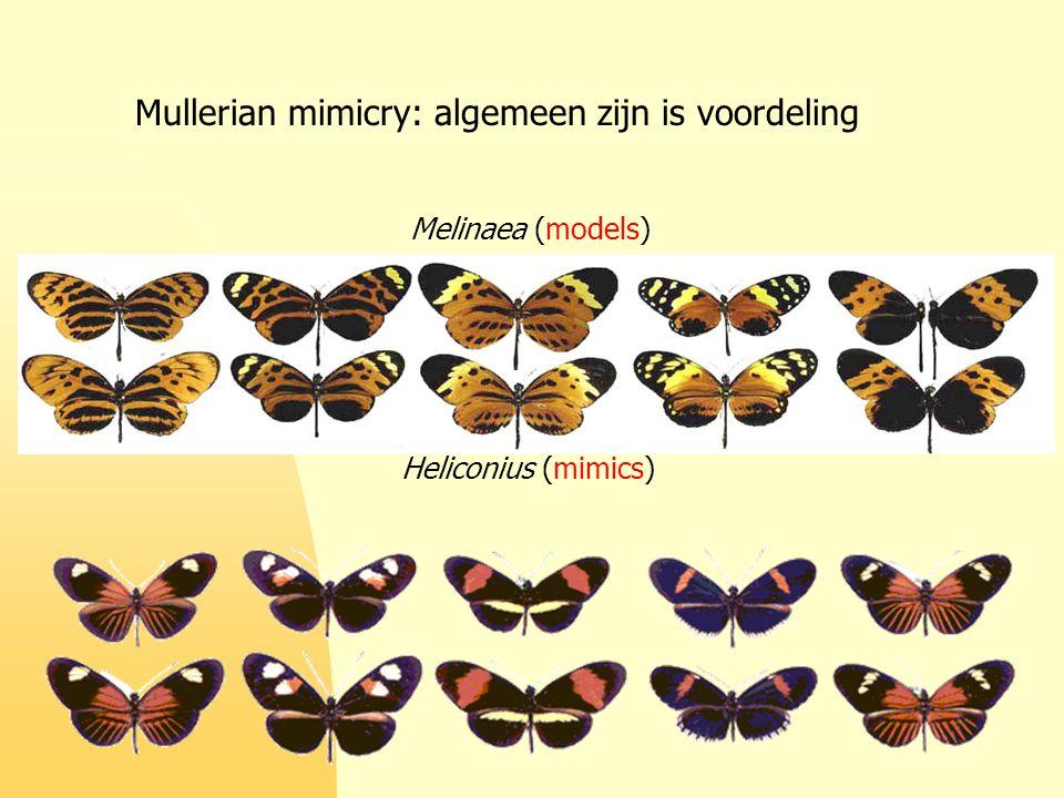 Mullerian mimicry: algemeen zijn is voordeling