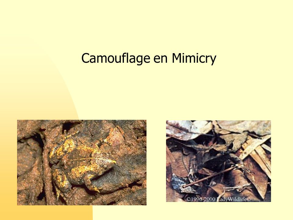 Camouflage en Mimicry