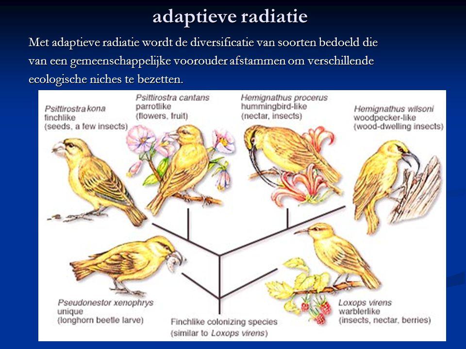 adaptieve radiatie Met adaptieve radiatie wordt de diversificatie van soorten bedoeld die.