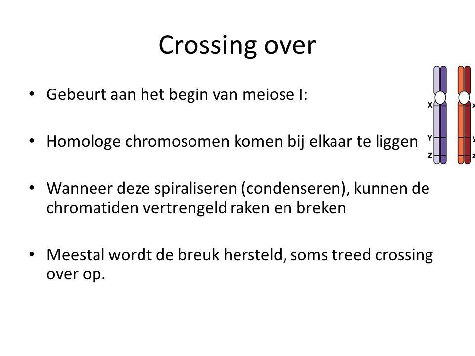 Crossing over Gebeurt aan het begin van meiose I: