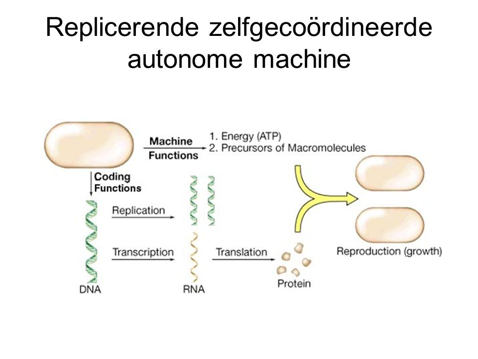 Replicerende zelfgecoördineerde autonome machine