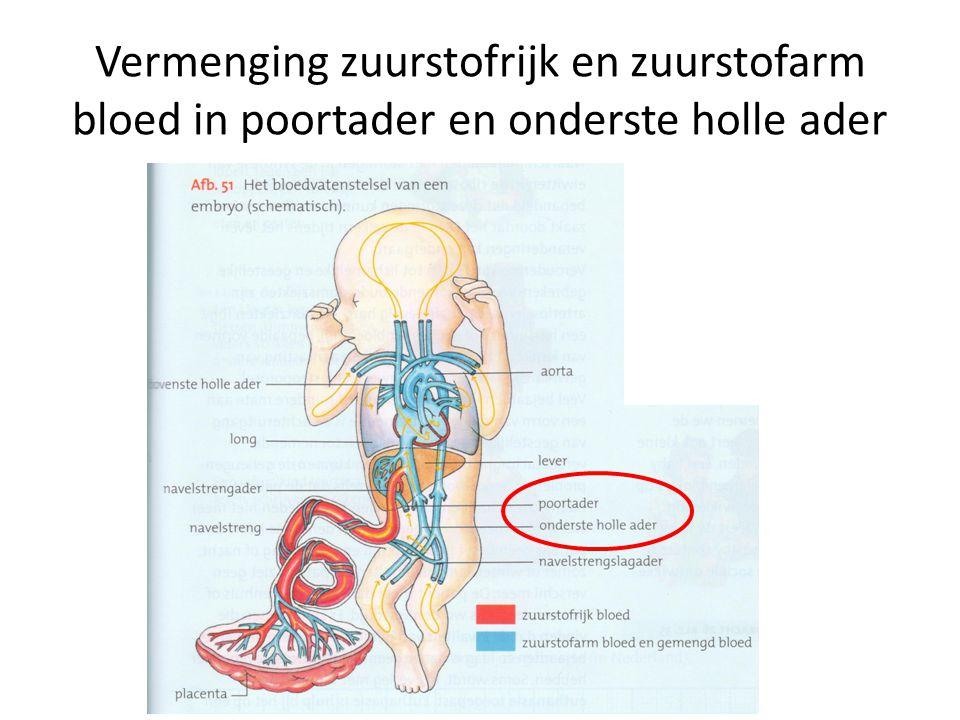 Vermenging zuurstofrijk en zuurstofarm bloed in poortader en onderste holle ader