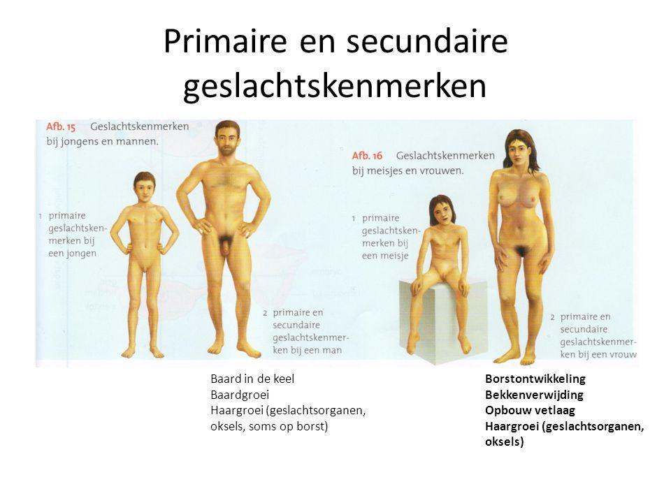Primaire en secundaire geslachtskenmerken