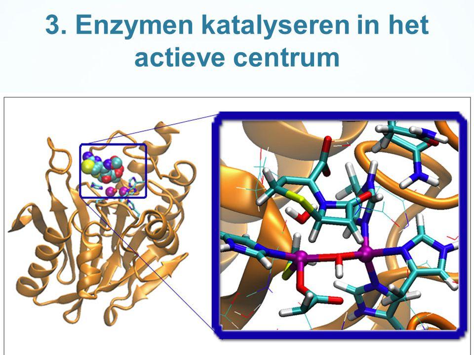 3. Enzymen katalyseren in het actieve centrum