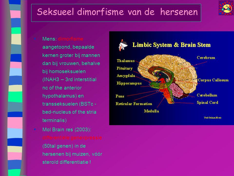 Seksueel dimorfisme van de hersenen