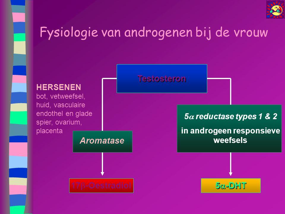 Fysiologie van androgenen bij de vrouw