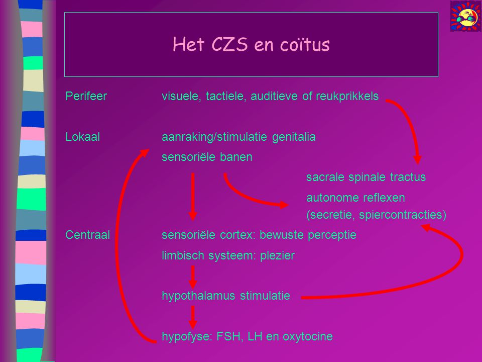 Het CZS en coïtus Perifeer visuele, tactiele, auditieve of reukprikkels. Lokaal aanraking/stimulatie genitalia.
