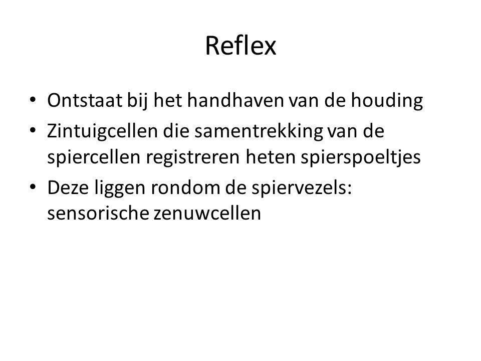 Reflex Ontstaat bij het handhaven van de houding