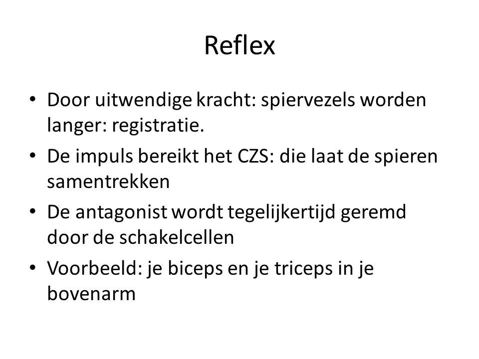 Reflex Door uitwendige kracht: spiervezels worden langer: registratie.