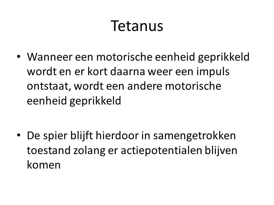 Tetanus Wanneer een motorische eenheid geprikkeld wordt en er kort daarna weer een impuls ontstaat, wordt een andere motorische eenheid geprikkeld.