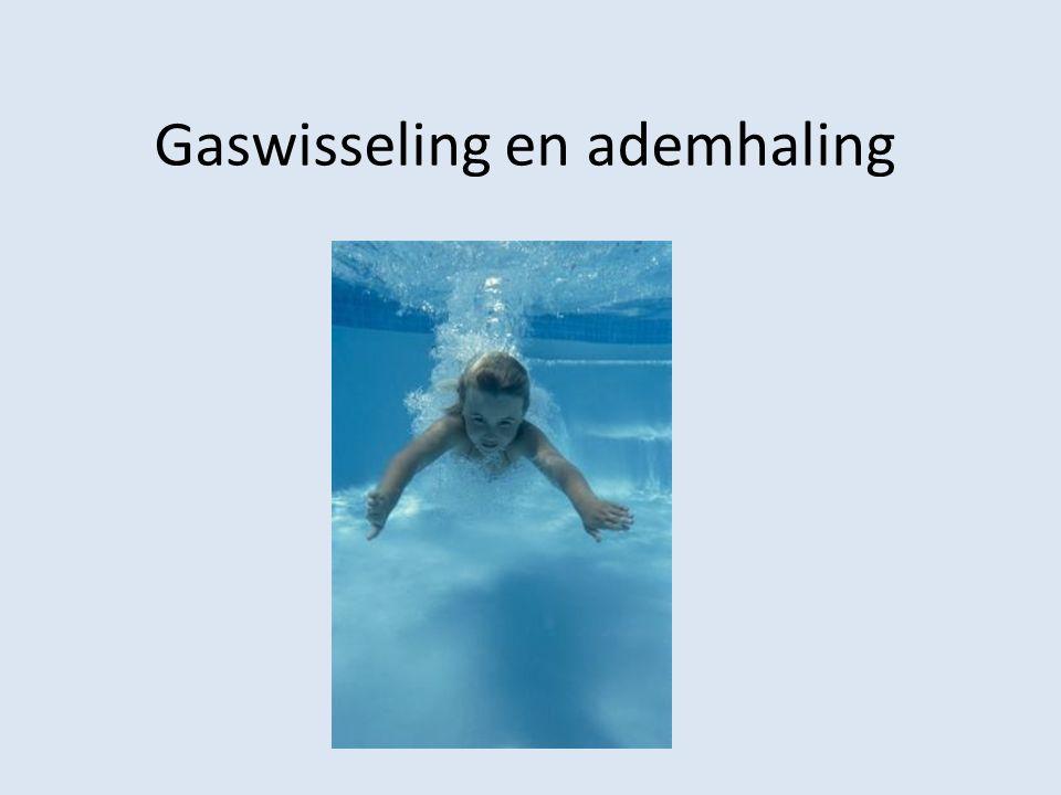 Gaswisseling en ademhaling