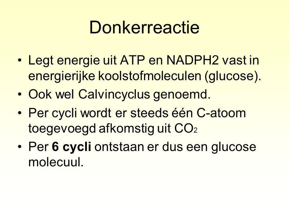 Donkerreactie Legt energie uit ATP en NADPH2 vast in energierijke koolstofmoleculen (glucose). Ook wel Calvincyclus genoemd.