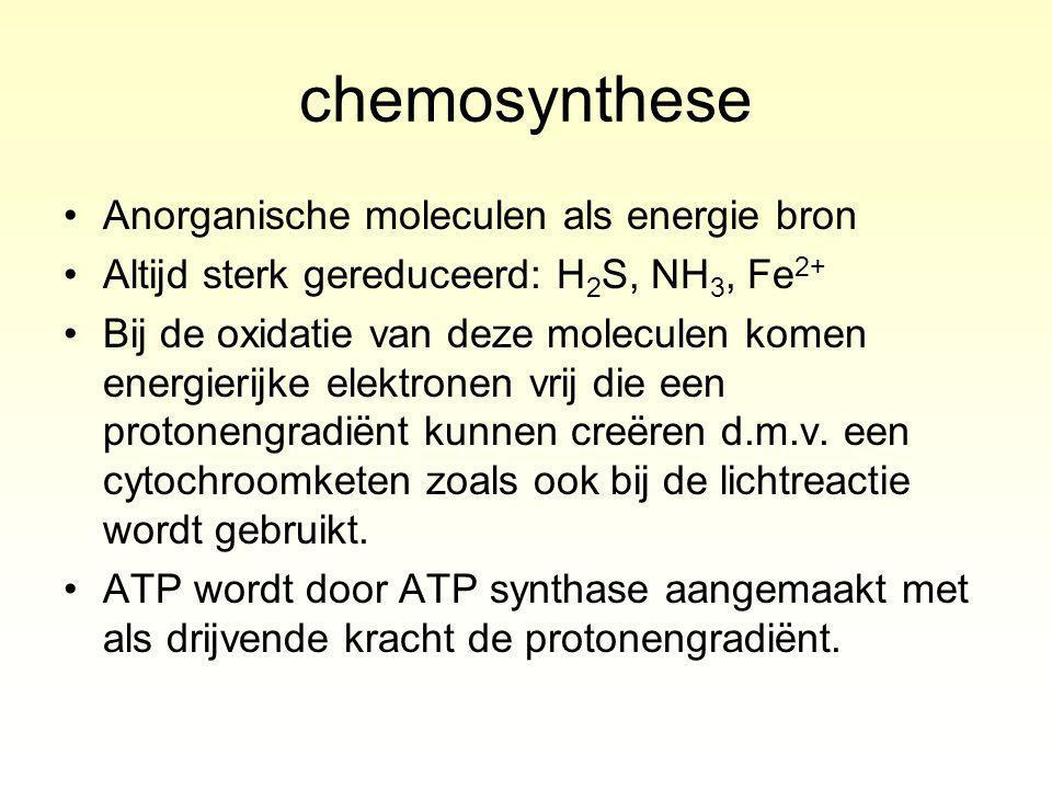 chemosynthese Anorganische moleculen als energie bron