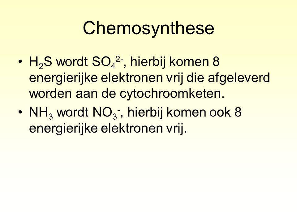 Chemosynthese H2S wordt SO42-, hierbij komen 8 energierijke elektronen vrij die afgeleverd worden aan de cytochroomketen.