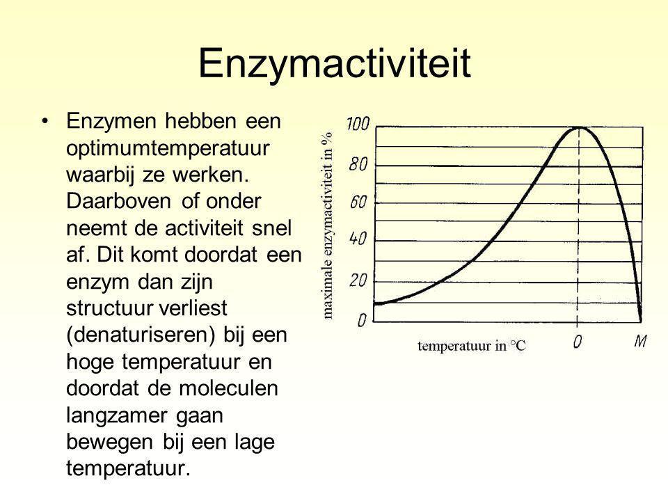 Enzymactiviteit