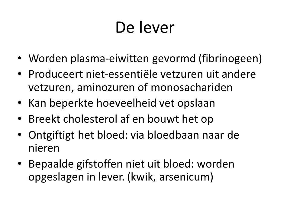 De lever Worden plasma-eiwitten gevormd (fibrinogeen)
