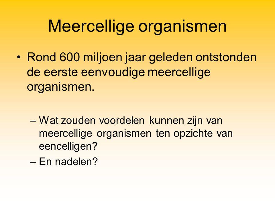Meercellige organismen