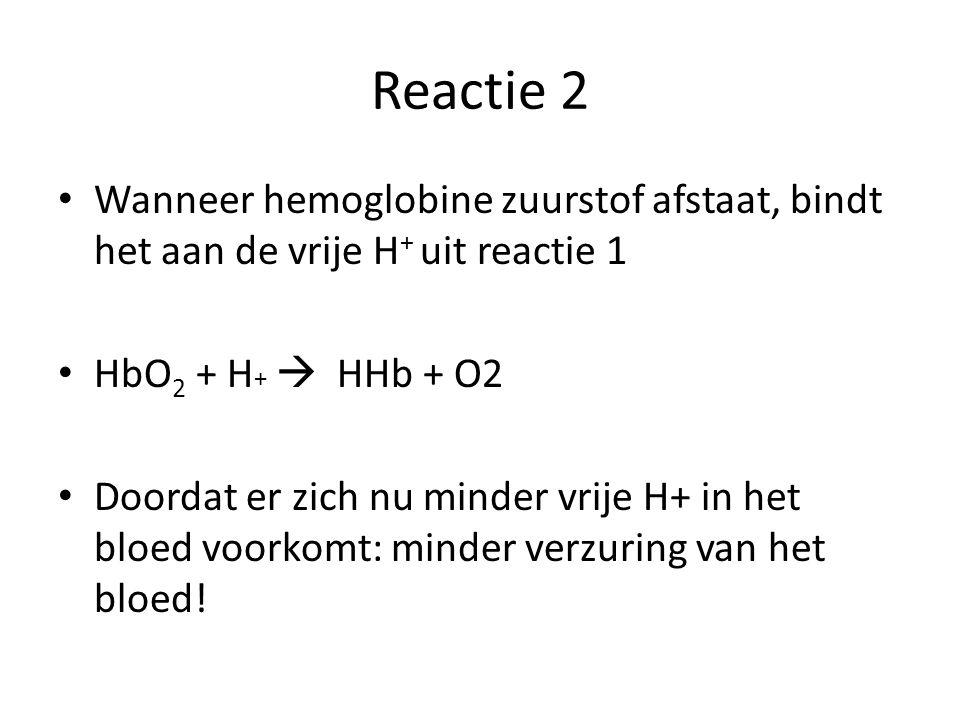 Reactie 2 Wanneer hemoglobine zuurstof afstaat, bindt het aan de vrije H+ uit reactie 1. HbO2 + H+  HHb + O2.