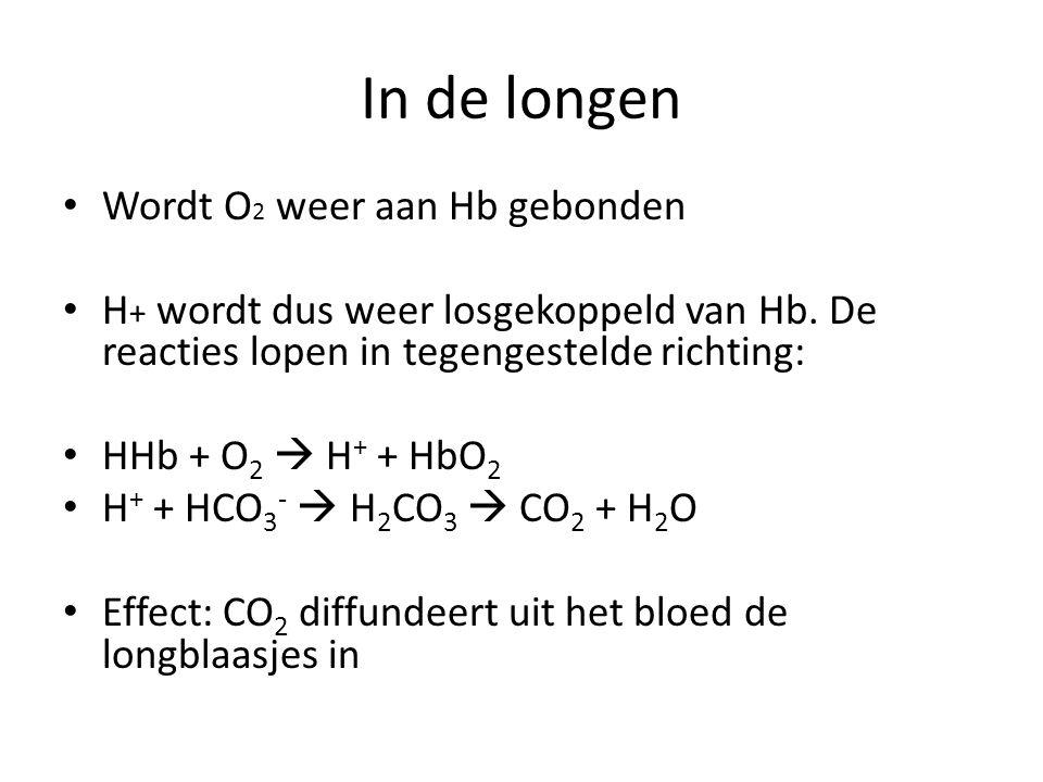 In de longen Wordt O2 weer aan Hb gebonden
