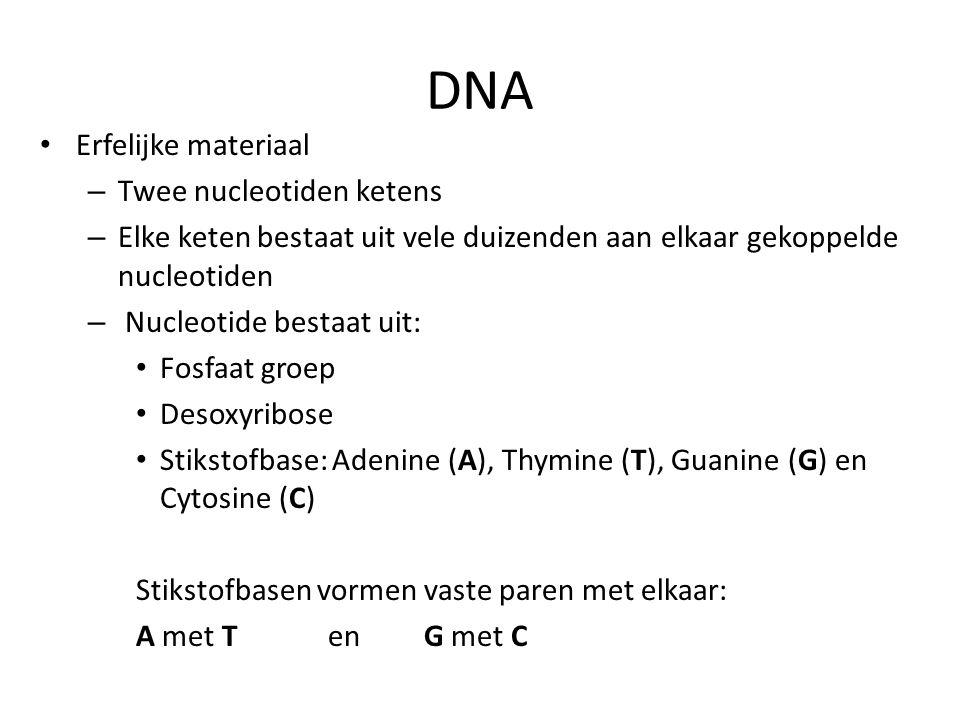DNA Erfelijke materiaal Twee nucleotiden ketens