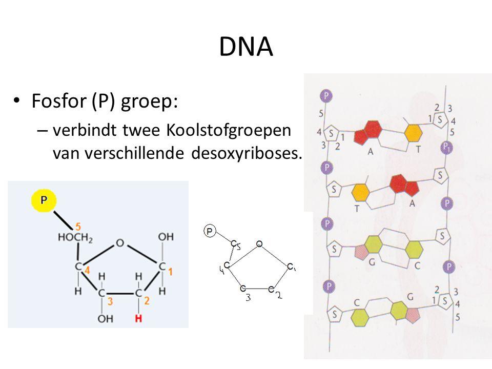 DNA Fosfor (P) groep: verbindt twee Koolstofgroepen van verschillende desoxyriboses.