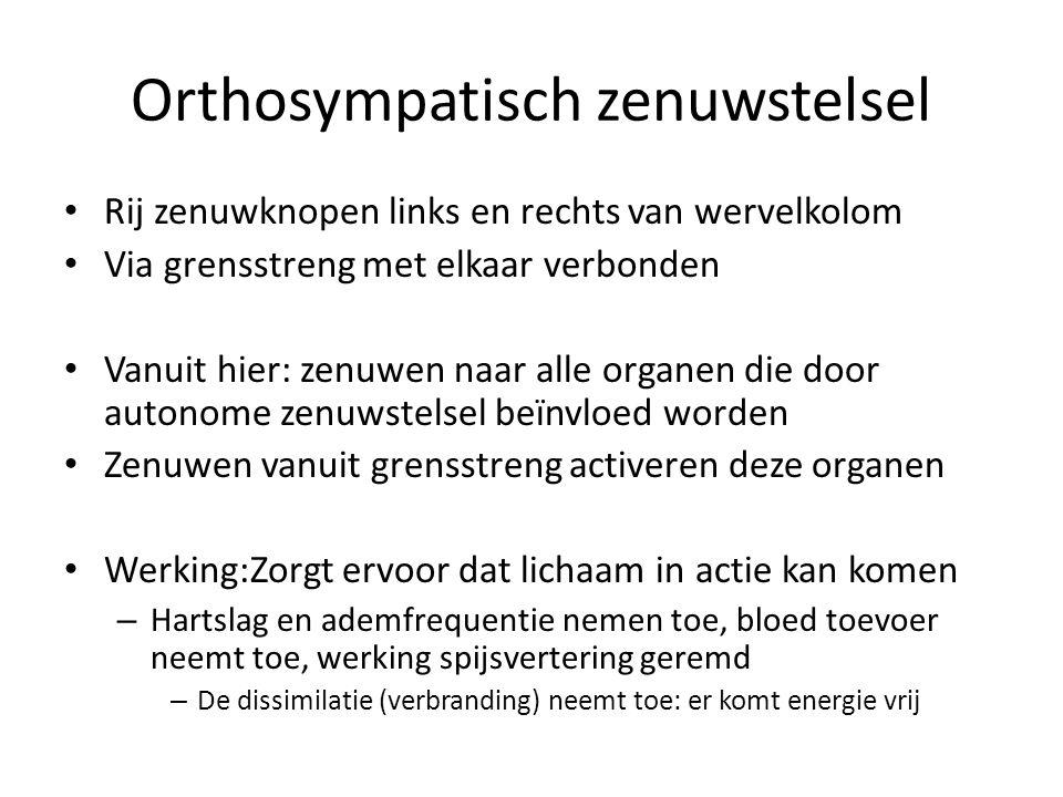 Orthosympatisch zenuwstelsel