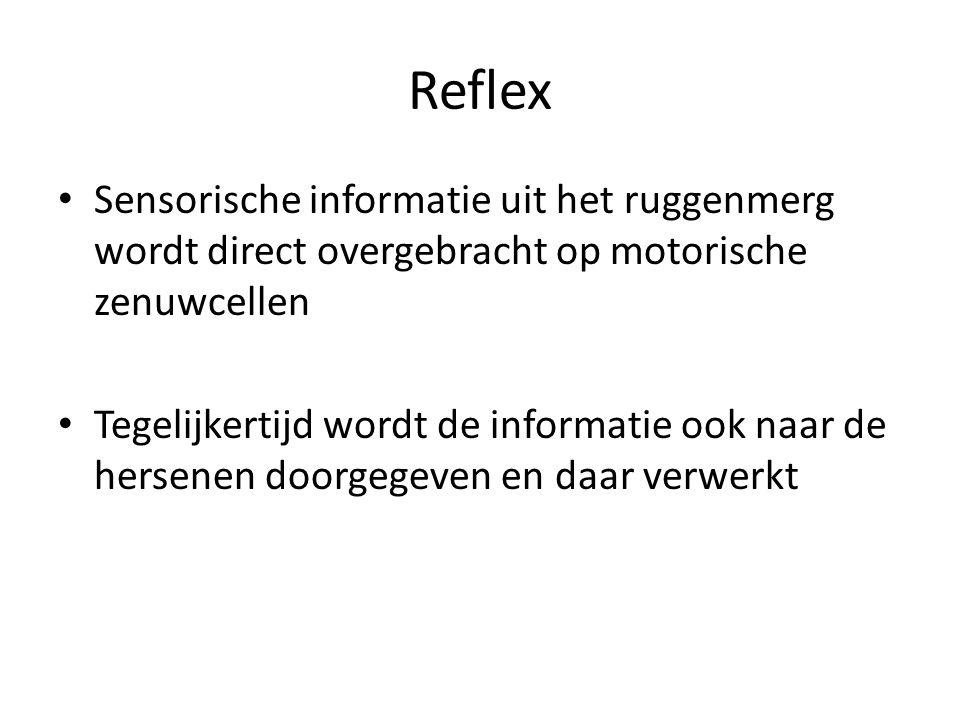 Reflex Sensorische informatie uit het ruggenmerg wordt direct overgebracht op motorische zenuwcellen.