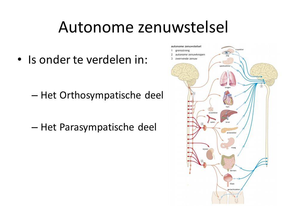 Autonome zenuwstelsel