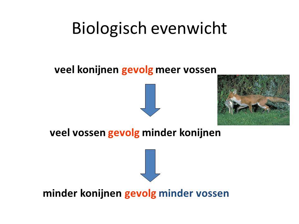Biologisch evenwicht veel konijnen gevolg meer vossen