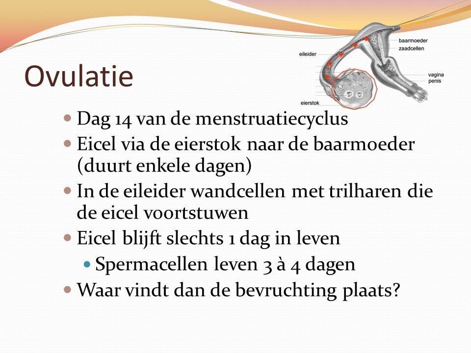 Ovulatie Dag 14 van de menstruatiecyclus